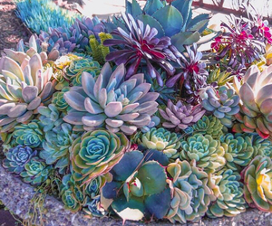 plants and tropical image