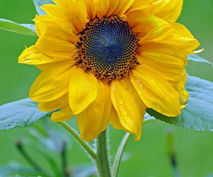 yellow, summer, and flowers image