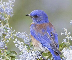 bird, nature, and spring image