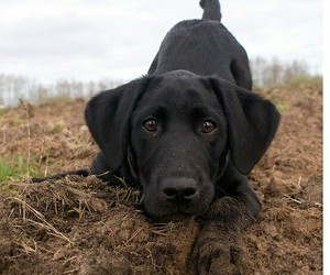 black, dirty, and puppy image