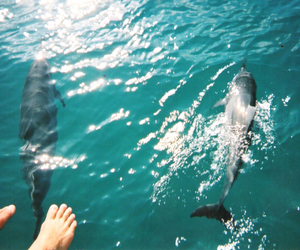 dolphin and ocean image