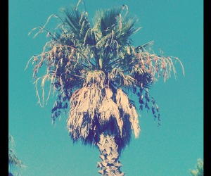 blue and palm image