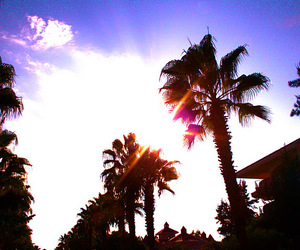clouds, palms, and sky image