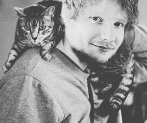 ed sheeran, cat, and singer image