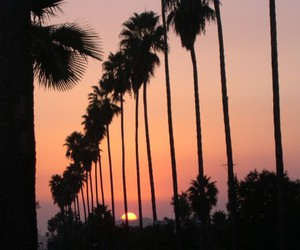 sun, August, and palm trees image