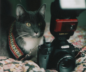 cat, photography, and hipster image