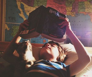 harry potter, book, and cat image