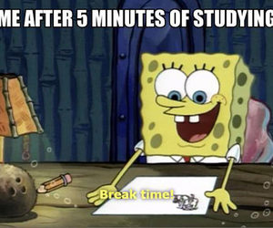 funny, spongebob, and studying image