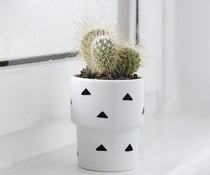 cactus, flowerpot, and green image