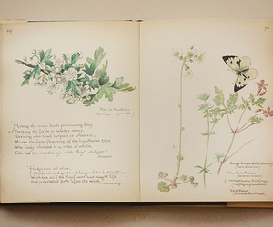 vintage, book, and flower image