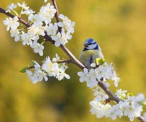 bird, flower, and spring image
