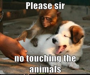funny and animals image