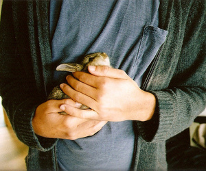 rabbit, cute, and boy image