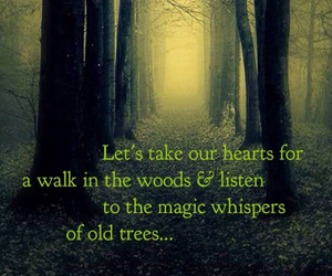 quotes, tree, and magic image