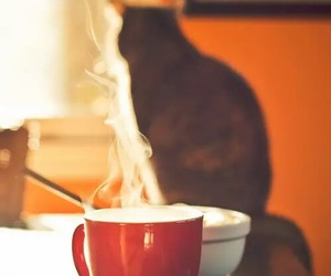 cat, cup, and coffee image