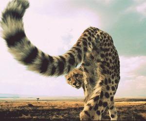 cheetah, animal, and photography image