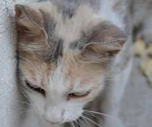 cat, holiday, and italy image