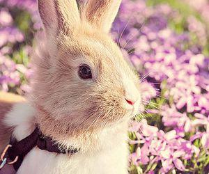 rabbit, spring, and beautiful image