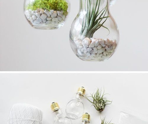 diy and plants image