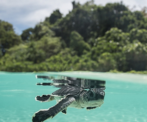 turtle, ocean, and animal image