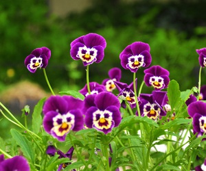 flowers, purple, and smile image