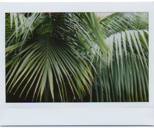 green, polaroid, and nature image