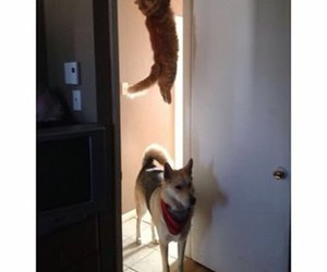 cats, dogs, and funny image