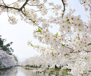 white, flowers, and spring image