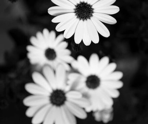 flowers, black and white, and tumblr image