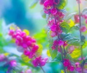 flowers, colors, and nature image