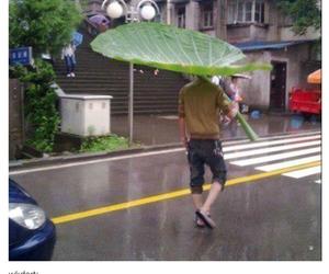 rain, umbrella, and leaves image