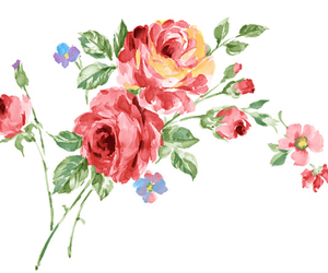 watercolour, illustrated, and roses image