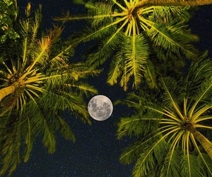 palm trees, moon, and night image