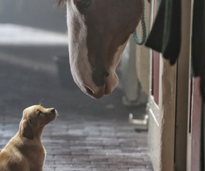 dog, horses, and stable image