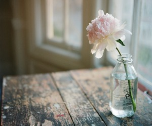 flower, phtography, and rose image