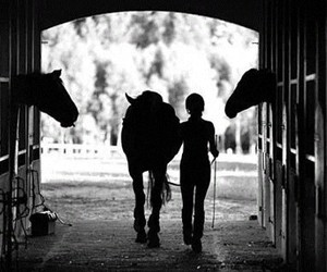 black and white, horses, and natural image