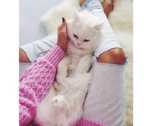 animal, fashion, and cat image