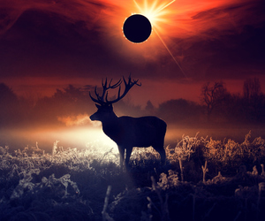 animals, landscape, and deer image