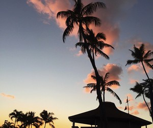 sky, blue, and palm trees image