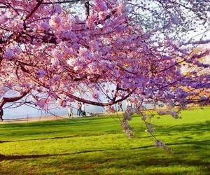 spring, tree, and flowers image