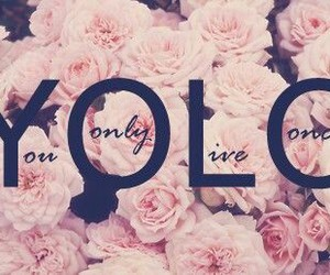 flower, yolo, and pink image
