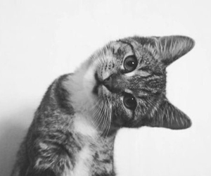 black & white, chat, and miaou image