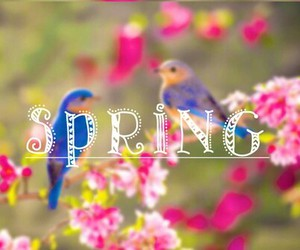 spring and birds image