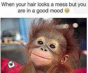 funny, hair, and monkey image