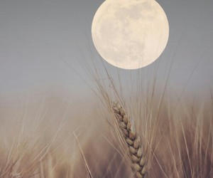 moon, nature, and photography image