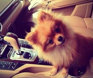 dog, cute, and car image