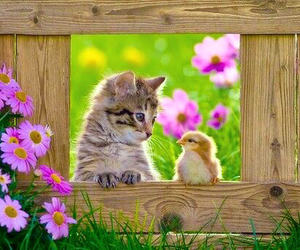Chick, cute, and kitten image