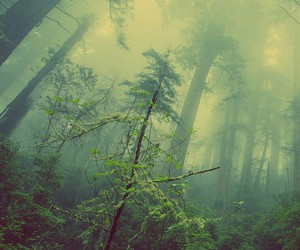 forest, green, and like image