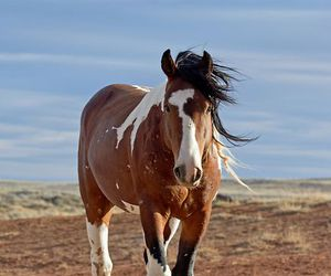 animal, beauty, and wild horse image