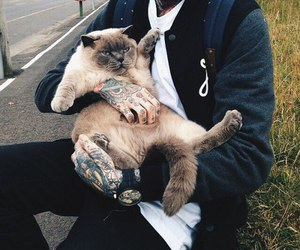 cat, Tattoos, and cute image